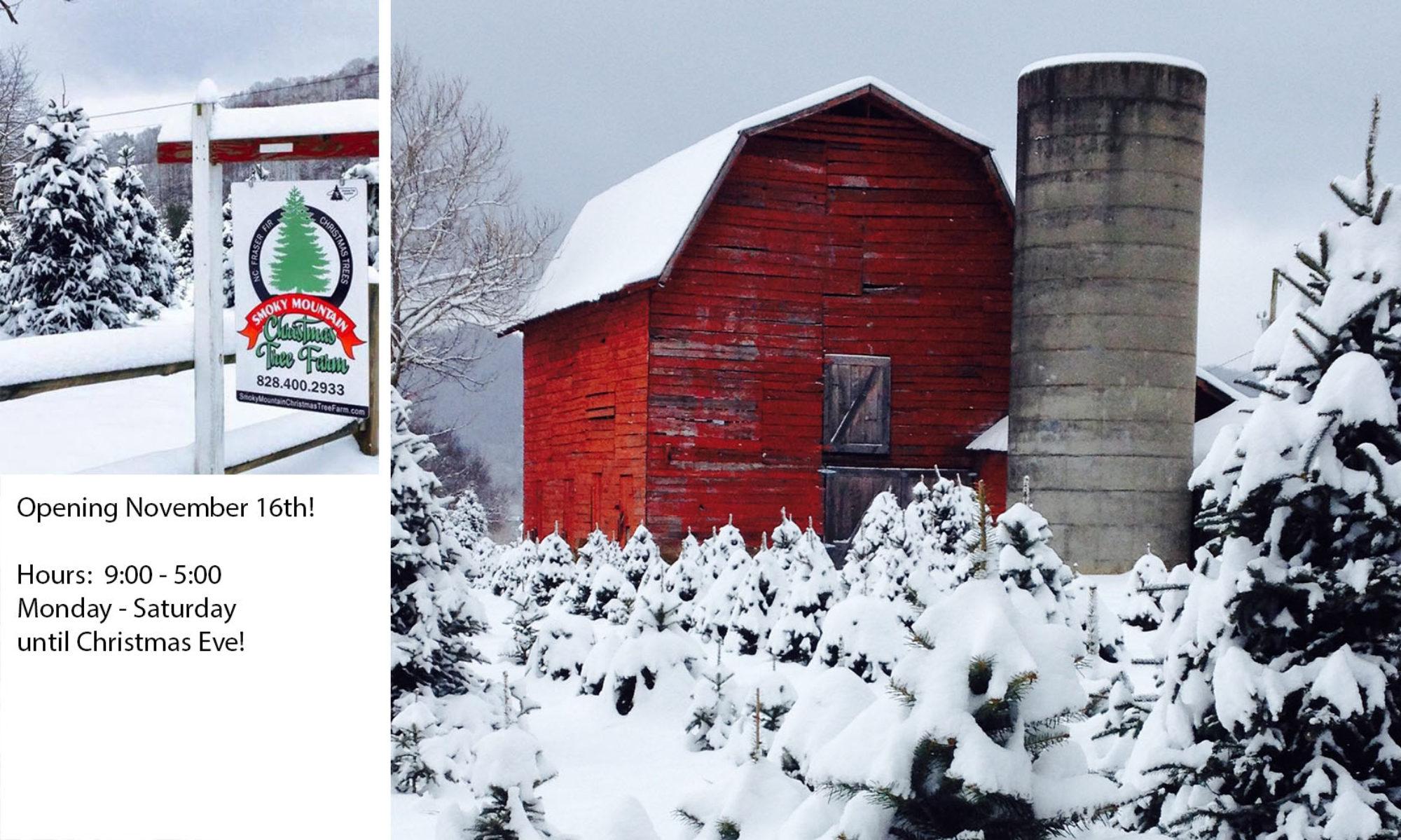 smoky mountain tree farm - Christmas Tree Farm Asheville Nc